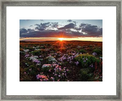 A Nuttalls Linanthastrum Morning Framed Print by Leland D Howard