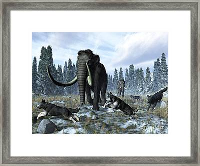 A Pack Of Dire Wolves Crosses Paths Framed Print by Walter Myers