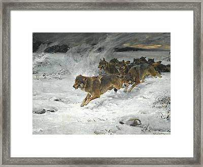 A Pack Of Wolves Framed Print by Alfred Kowalski