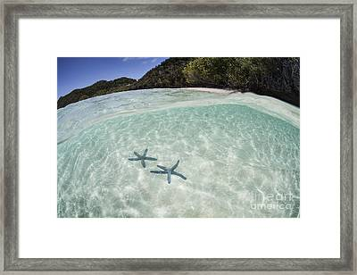 A Pair Blue Starfish On The Seafloor Framed Print by Ethan Daniels