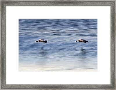 A Pair Of Brown Pelicans Flying Framed Print by Rich Reid