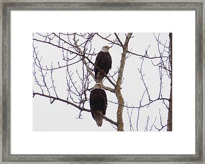 A Pair Of Eagles Framed Print by Karen Molenaar Terrell