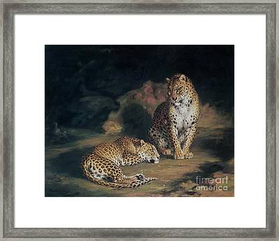 A Pair Of Leopards Framed Print by William Huggins