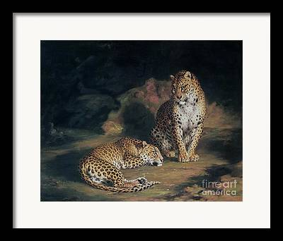 Jungle Cat Framed Prints