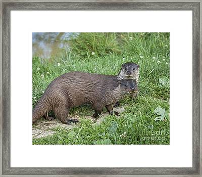 A Pair Of Otters Framed Print by Philip Pound