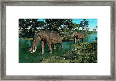 A Pair Of Platybelodon Grazing Framed Print by Walter Myers