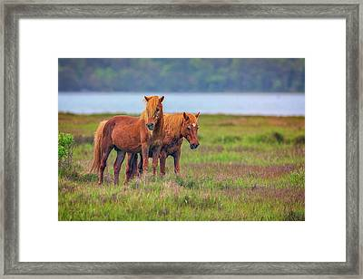 A Pair Of Ponies Framed Print by Rick Berk