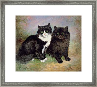 A Pair Of Pussy Cats Framed Print by Lilian Cheviot