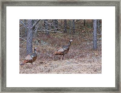 Framed Print featuring the photograph A Pair Of Turkeys 1152 by Michael Peychich