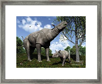 A Paraceratherium Mother Grazes Framed Print by Walter Myers