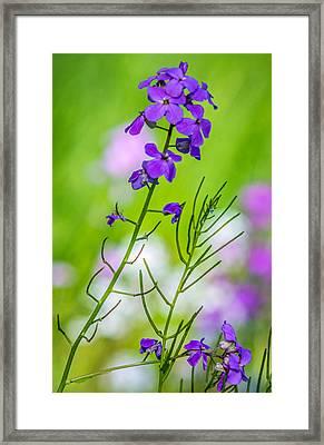 A Pastel Spring Framed Print