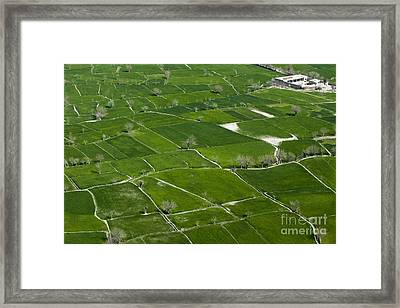 A Patch Work Of Green Framed Print by Tim Grams