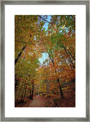 A Path Diverged In The Woods Framed Print by Rick Berk