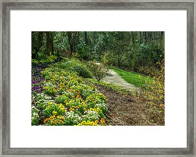 A Path Of Color Framed Print
