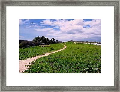 A Path Thru The Dunes Framed Print