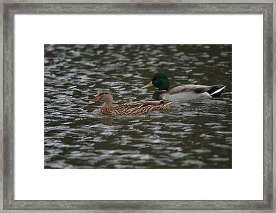 A Peaceful Floating Framed Print