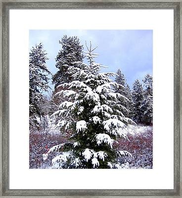 A Peaceful Winter Day Framed Print