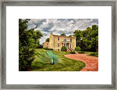 A Peacock At Beallair Framed Print by Lois Bryan
