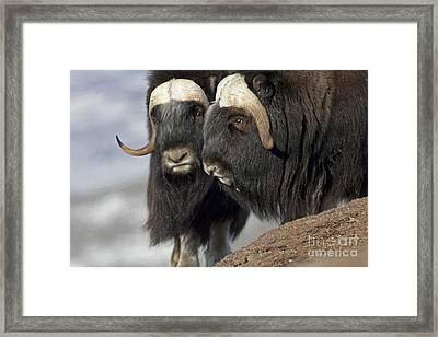 A Penny For Your Thoughts Framed Print by Tim Grams