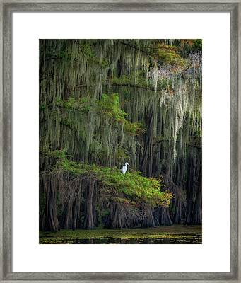 A Perch With A View Framed Print