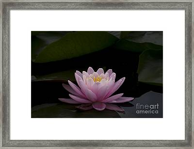 A Perfect Bloom Framed Print