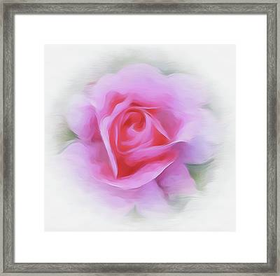 A Perfect Pink Rose Framed Print