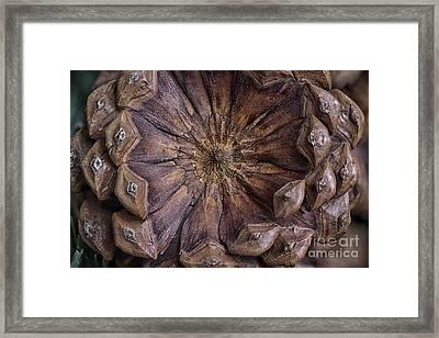 A Pine Cone Framed Print