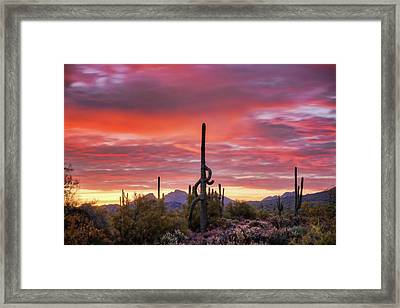 A Pink Kissed Sonoran Sunrise  Framed Print