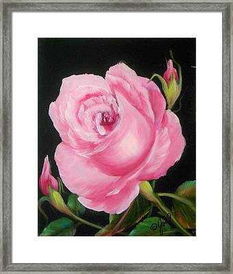 A Pink Rose Framed Print by Joni McPherson