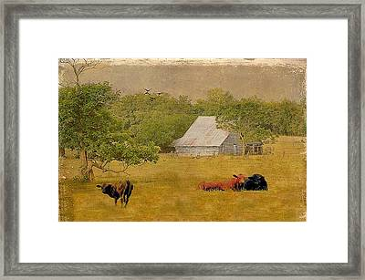 A Place For Togetherness Framed Print by Jan Amiss Photography