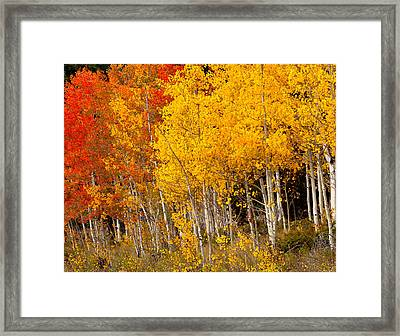A Place In The Aspen Forest Framed Print
