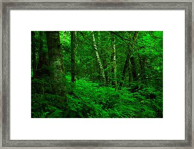 A Place In The Forest Framed Print by Jeff Swan