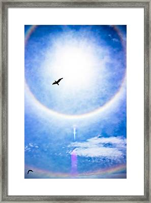 A Place In The Sun Framed Print by Colleen Kammerer