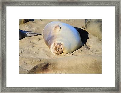 A Place In The Sun Framed Print by Donna Kennedy