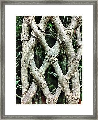 A Plant Trunk Framed Print by Tom Gowanlock