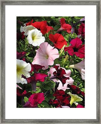 A Plethora Of Petunias Framed Print