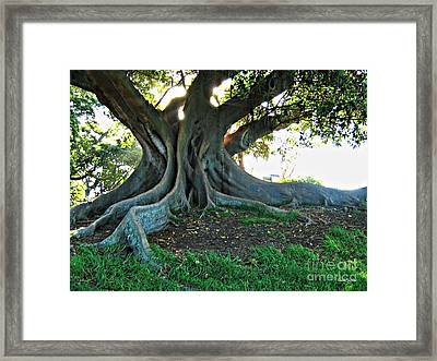 A Poem As Lovely As A Tree Framed Print