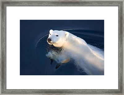 A Polar Bear Glance Framed Print