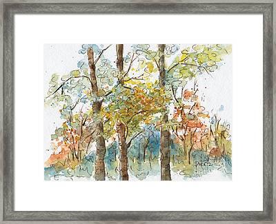 A Poplar Treeo Framed Print