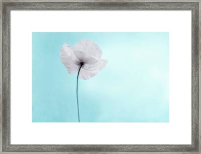 A Poppy Against A Cool Blue Background Framed Print by Alexandre Fundone