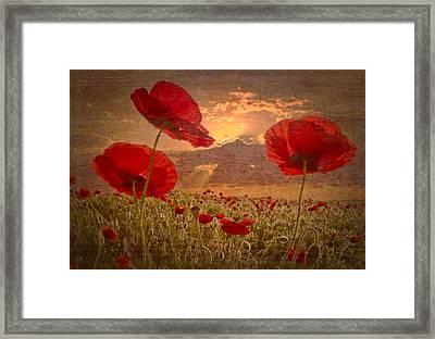 A Poppy Kind Of Morning Framed Print by Debra and Dave Vanderlaan