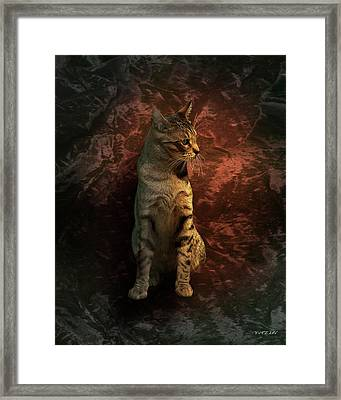 A Portrait Of Coco Framed Print