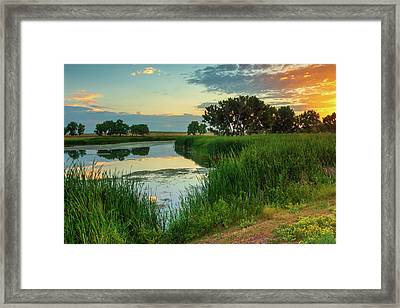 A Portrait Of Summer Framed Print