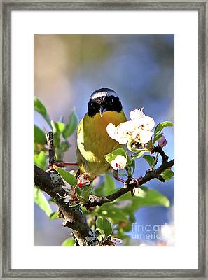 A Pose Framed Print by Marle Nopardi