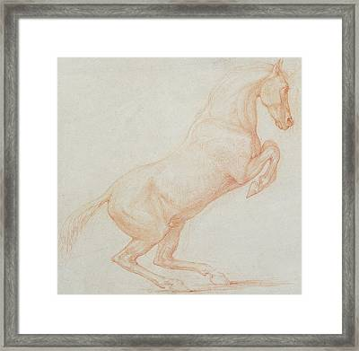A Prancing Horse Framed Print by George Stubbs