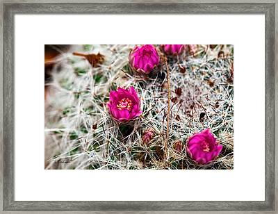 A Prickly Bed Framed Print by Christopher Holmes