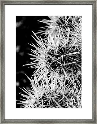 A Prickly Subject Framed Print