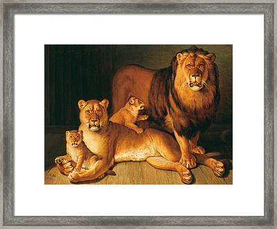 A Pride Of Lions Framed Print