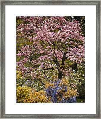 A Profusion Of Spring Framed Print by Chris Lord