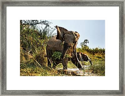 A Protective Mama Elephant With Calf  Framed Print